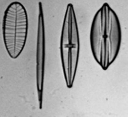 TPs Microscope et Lunette