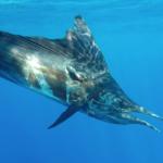 [21-22] PIMS04 • Capteur optique pour le suivi d'animaux marins